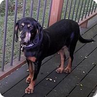 Adopt A Pet :: Jenny - PENDING - Grafton, WI