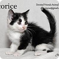 Adopt A Pet :: Licorice - Ortonville, MI
