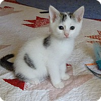 Adopt A Pet :: Labatts-The Charmer born mid A - Taylor Mill, KY