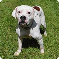 Adopt A Pet :: DOT - Naples, FL