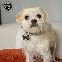 Adopt A Pet :: Roxy - Inglewood, CA