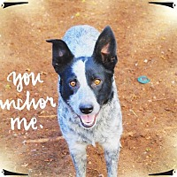 Adopt A Pet :: DAVEY CROCKETT - Chandler, AZ