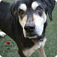 Adopt A Pet :: Mandy - Youngwood, PA