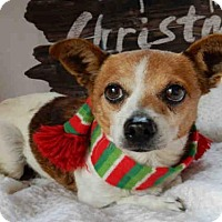 Adopt A Pet :: MOZART - Upland, CA