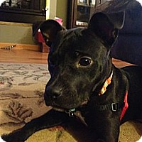 Adopt A Pet :: POLLY - Minnetonka, MN