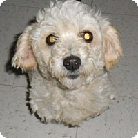 Adopt A Pet :: Jade - Lockhart, TX