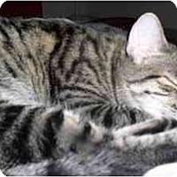 Adopt A Pet :: Cozette - Scottsdale, AZ