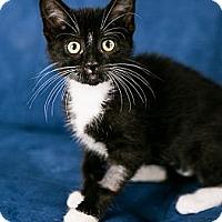 Adopt A Pet :: Moira - Eagan, MN