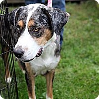 Adopt A Pet :: Blue - Richmond, VA
