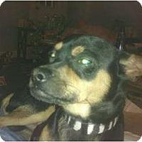 Adopt A Pet :: Duncan - Cumberland, MD