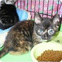 Adopt A Pet :: Keekii - Colmar, PA