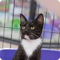 Adopt A Pet :: brandi - Redondo Beach, CA