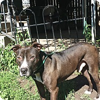 Adopt A Pet :: Jacob - North Tonawanda, NY