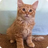Adopt A Pet :: Paolo - Larned, KS