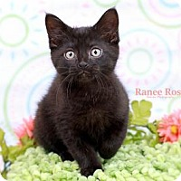 Adopt A Pet :: Houghton - Sterling Heights, MI