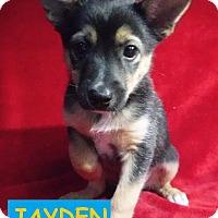 Adopt A Pet :: Jayden - Batesville, AR