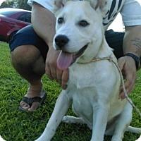 Adopt A Pet :: Emma (CP) - Fremont, CA