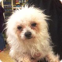 Adopt A Pet :: Tolouse - Concord, CA