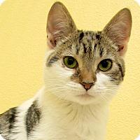 Adopt A Pet :: Ernie - Eastsound, WA
