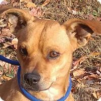 Adopt A Pet :: Chucky - Washington, DC