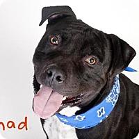 Adopt A Pet :: *CHAD - Sacramento, CA