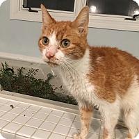 Adopt A Pet :: Chris - Richmond, VA
