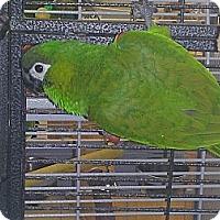 Adopt A Pet :: Bennie - Punta Gorda, FL