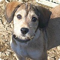 Adopt A Pet :: Mac - Albany, NY