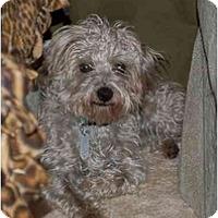Adopt A Pet :: Bono - Charlotte, NC