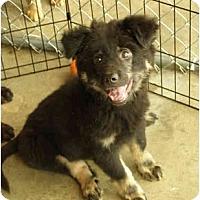 Adopt A Pet :: Boo - New Boston, NH