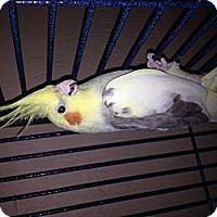 Adopt A Pet :: Sunshine - Punta Gorda, FL