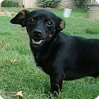 Adopt A Pet :: Buddy Boy (Urgent) reduced - Brattleboro, VT
