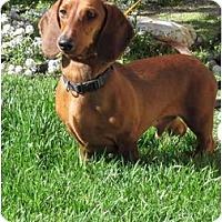 Adopt A Pet :: Brutus - Garden Grove, CA