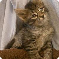 Adopt A Pet :: Adam - Reston, VA