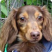 Adopt A Pet :: OBIE - Portland, OR