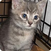 Adopt A Pet :: Thyme - Acme, PA