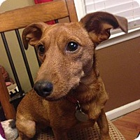 Adopt A Pet :: Lillian - Marietta, GA