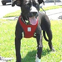 Adopt A Pet :: Tahnee - West Los Angeles, CA