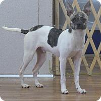 Adopt A Pet :: Snoopy - Manning, SC