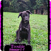 Adopt A Pet :: Trouble meet me 10/3 - Manchester, CT