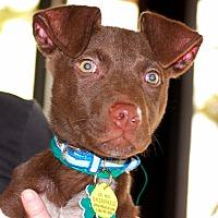 Adopt A Pet :: Franklin - Alpharetta, GA