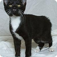 Adopt A Pet :: Fran M - Sacramento, CA