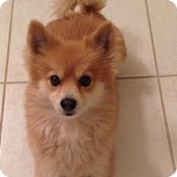 Adopt A Pet :: Toby - Scottsdale, AZ