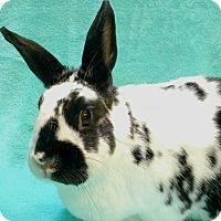 Adopt A Pet :: TROY - San Clemente, CA
