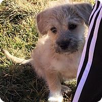 Adopt A Pet :: Cassidy - Dayton, OH