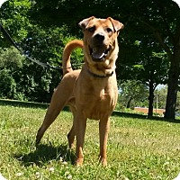 Adopt A Pet :: Memphis - Livonia, MI