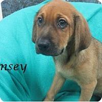 Adopt A Pet :: Ramsey - Bartonsville, PA