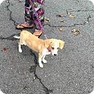 Adopt A Pet :: Romi