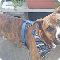 Adopt A Pet :: Stevie (Wonderful) - Winfield, PA