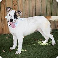 Adopt A Pet :: Moe - Lakeland, FL